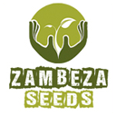 Zambeza Seeds wietzaadjes