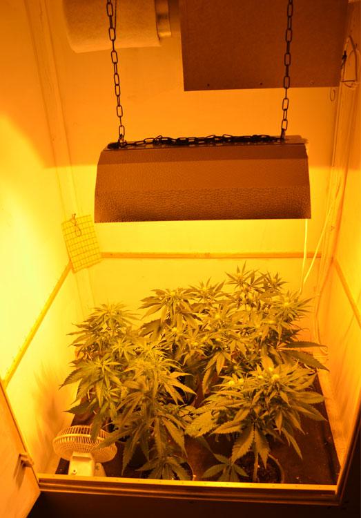 5 wietplantjes in een kweekkast.