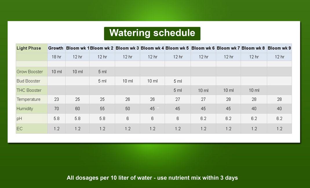 Marijuana Booster Voedingsschema.