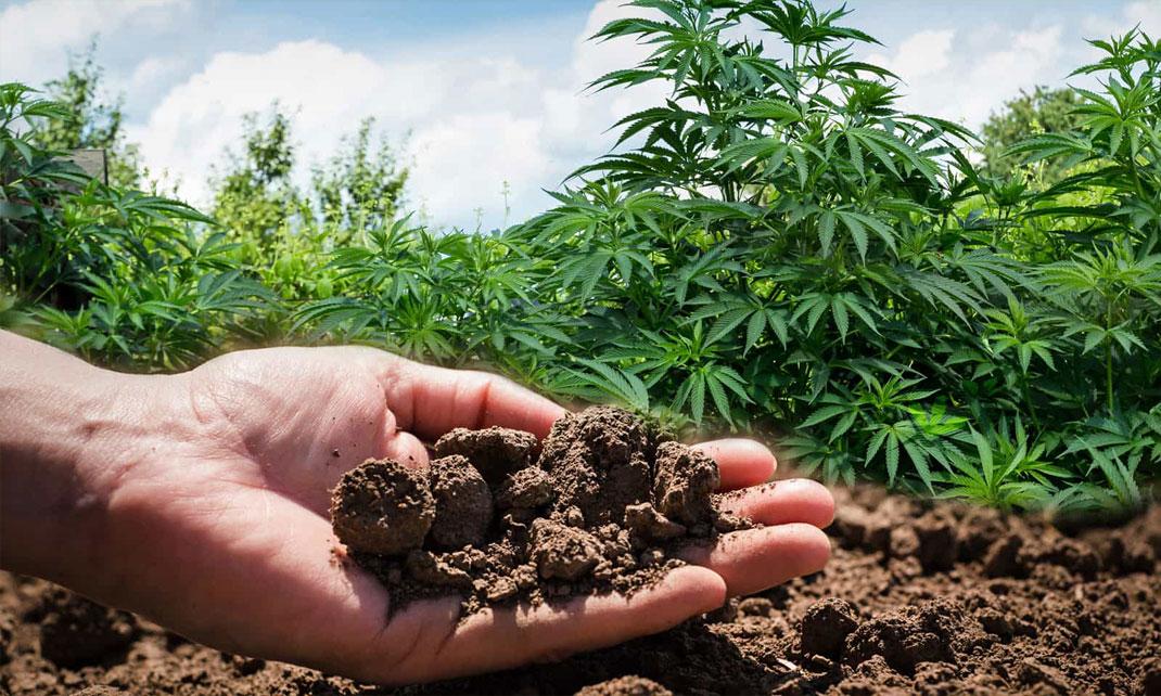Op aarde wiet kweken.