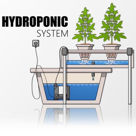Hydroponic systeem.