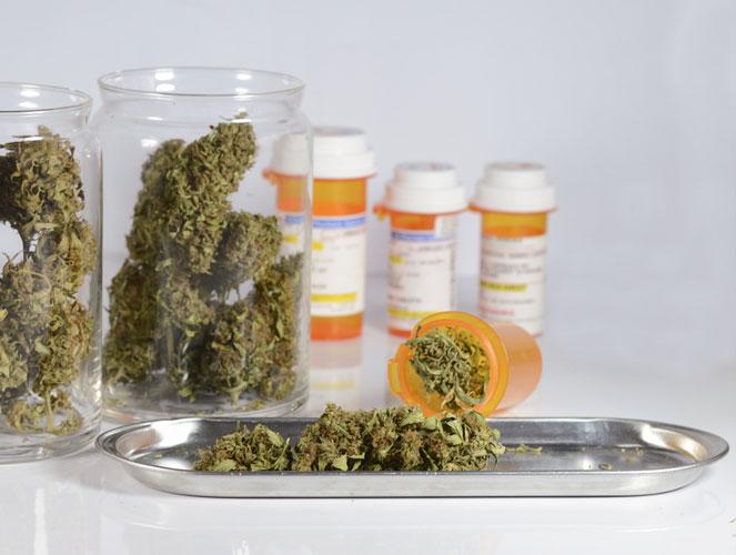 CBD rijke cannabis: marihuana soorten met een hoog CBD gehalte.