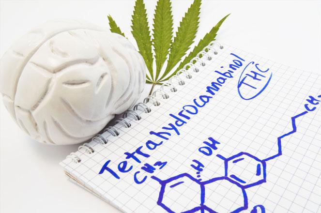 THC kan leiden tot een verandering in de hersenactiviteit.